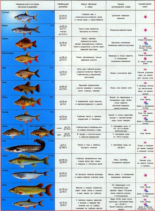 в какую погоду ловить рыбу сетями